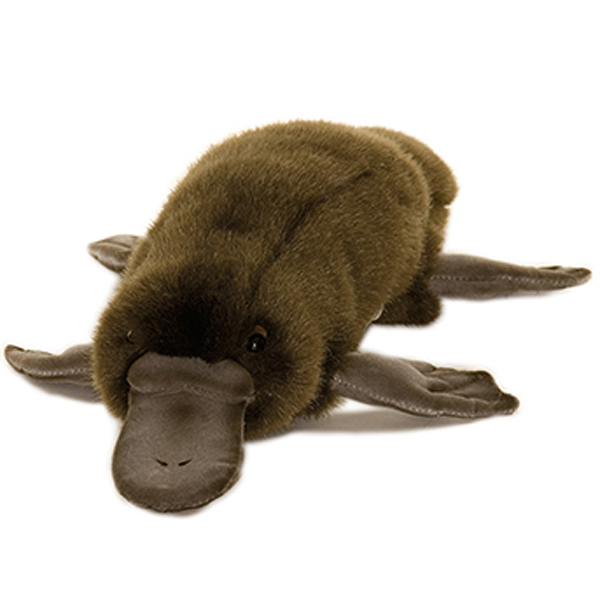 Platypus Description